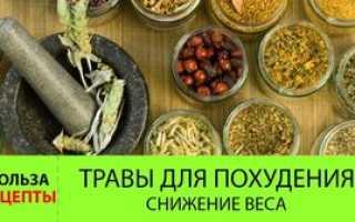 Народный метод травы для похудения. Худеем вместе с травами