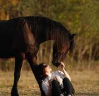 Статусы о лошадях со смыслом. Лучшие цитаты и высказывания о лошадях