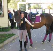 Колокольчиком звеня у коня как называется. Средства управления лошадью