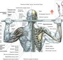 Упражнения для мышц спины. Передняя плечевая протяжка