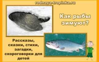 Как рыбы готовятся к зиме? Зимовка рыбы в прудах.