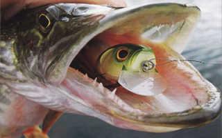 Рыбалка в мае где можно ловить. Рыбалка в мае: какую рыбу, на что и как ловить в мае