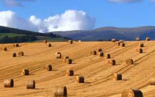 Отличие сена от соломы. Сено, сенаж, силос и солома: все о кормлении лошади
