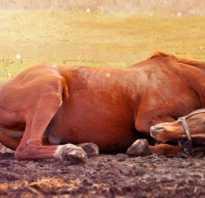 Дохлая лошадь сонник. Умирающая лошадь