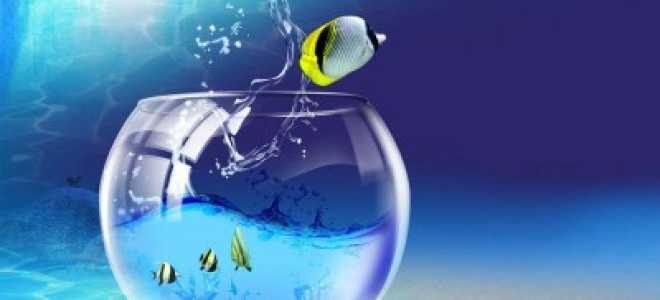 Почему рыба выпрыгивает из воды? Почему рыбы выпрыгивают из аквариума. Что делать и как этого избежать