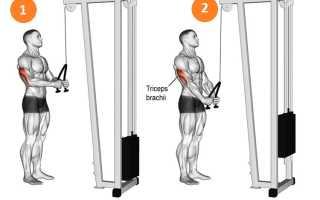 Упражнение разгибание рук. Разгибание рук с верхнего (вертикального) блока на трицепс