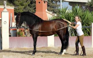 Конное ромашково. Обучаем лошадь осаживанию Осадить лошадь