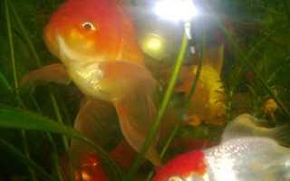 Рыбка у которой память 3 секунды. Память рыбы – три секунды или больше