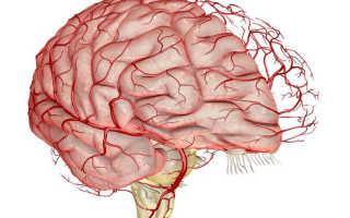 Подборка упражнений для улучшения кровообращения головного мозга и рекомендации по их выполнению. Упражнения для улучшения кровоснабжения мозга от кацудзо ниши