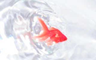 Психологическая сказка про маленькую рыбку! Рассказ про рыбок для детей. Что ты знаешь о рыбках