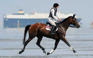 Рысь лошади: как ездить рысью правильно. Бег лошади: учимся определять различные аллюры