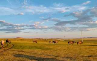 Короткое содержание о чем плачут лошади. Пересказ произведения «О чем плачут лошади» Абрамова Ф.А