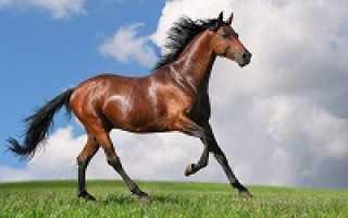Масса коня. Сколько весят лошади? Формулы определения их массы