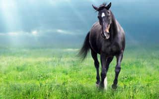 К чему снится голова лошади, как понять такой сон? К чему снится лошадь — толкование сна.