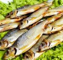 Как правильно завялить плотву в домашних условиях. Как вялить рыбу, этапы, рецепт вяления в домашних условиях