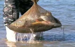 Прогноз клева рыбы в херсоне рыбхоз. Прогноз клева рыбы в Херсоне