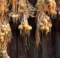 Можно ли сушить лук на зиму. Лук зеленый, репчатый, порей: как сушить большую тройку на зиму в электросушилке и духовке