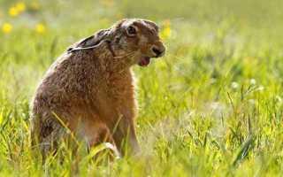 Где искать зайца осенью в ноябре. Охота на зайца осенью без собаки