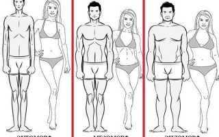 Тип телосложения эндоморф у женщин. Эндоморф: особенности типа телосложения