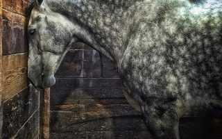 Как спят лошади? Правда ли что кони спят стоя? Как спят лошади: мифы и правда о способах отдыха животных.