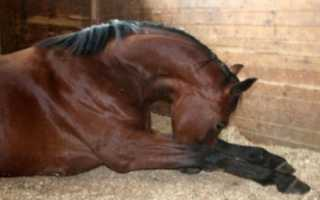 Инфекционная анемия лошадей. Инфекционная анемия лошадей в России: видео