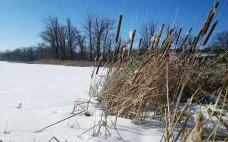 На что ловить окуня зимой в марте. Ловля по последнему льду ранней весной