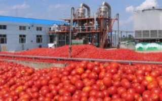 Томатная паста в домашних условиях. Производство томатной пасты как бизнес