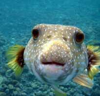 Несколько фактов об интеллекте рыб. Есть ли ум у рыб