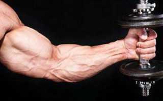 Как прокачать лучевые мышцы. Как накачать плечелучевую мышцу