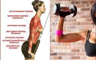 Тренировка рук для девушек. Тренировки в тренажерном зале для девушек