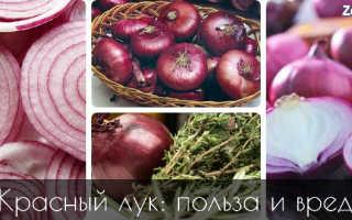 Красный лук, так ли он полезен? Калорийность, свойства, состав, вред. Полезные свойства и противопоказания красного лука