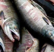 Что полезнее лосось или горбуша.