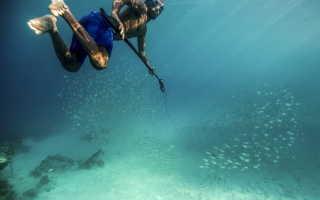 Подводная охота уроки начинающим. Поэтому главные секреты подводной охоты