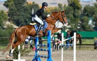 Конный спорт опасен или полезен. Чем же полезен конный спорт? Конный спорт — конкур