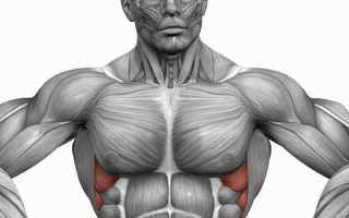 Комплекс упражнений. Зубчатые мышцы