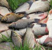 Молитва чтобы поймать рыбу. Что пожелать перед рыбалкой