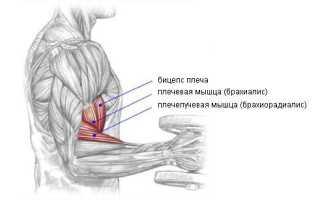 Упражнение на бицепс молоток. Сгибание рук с гантелями «молот»