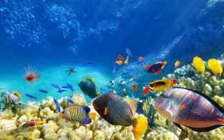 Загадки про рыб сложные. Загадки про рыбудля детей и взрослых