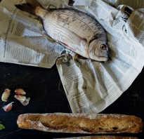 Почему у свежей рыбы красные жабры. Как определить свежесть рыбы