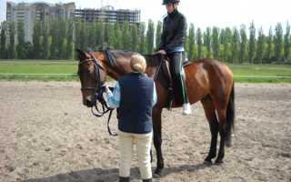 Как научиться ездить на лошади с минимальным риском. Катание верхом и правильная седловка лошади