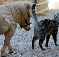 Самая маленькая лошадь в мире — Тамбелина. Самые маленькие породы лошадей: описание, размеры
