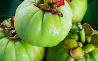 Гарциния камбоджийская — вред и польза. Гарциния камбоджийская как целебное растение