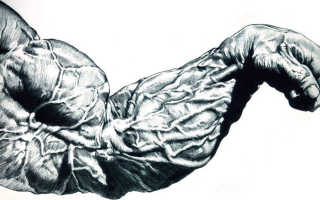 Как накачать локтевые мышцы. Анатомия мышц рук