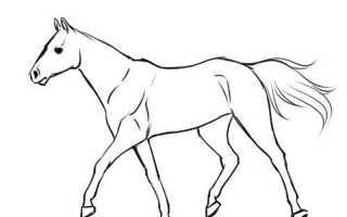 Как нарисовать лошадь и человека верхом. Как нарисовать лошадь поэтапно