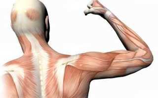 Атрофирование мышц причины. Как восстановить атрофированные мышцы