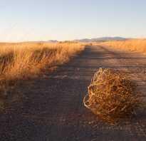 Чем отличается осетр от лосося. Разница между горбушей и лососем