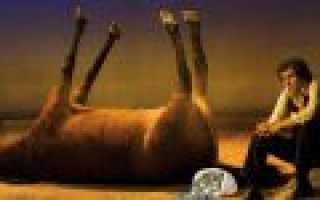 Сонник лошадь мертвая во сне. Мертвые лошади