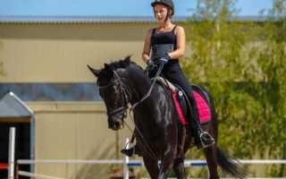 Катание на лошадях польза и вред. Чем полезны конные прогулки? Чем же полезен конный спорт