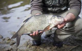 Ловля рыбы в озере в июне. На что ловить леща в июне