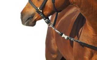 Чему снится лошадь без головы. Человек с головой лошади